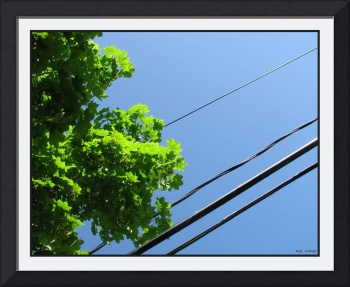 Tree Canopy And Wire Diagonal