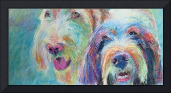 spinone dogs (the 60's)