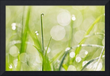 Dewdrops in the Sunlit Grass