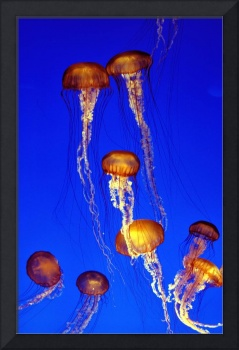 World's Most Famous Jellyfish