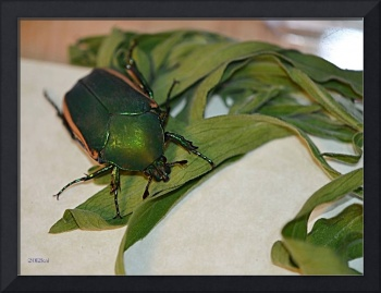 Green Beetle with Plants