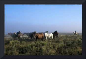 Herd Of Horses And Cowboy On Horseback