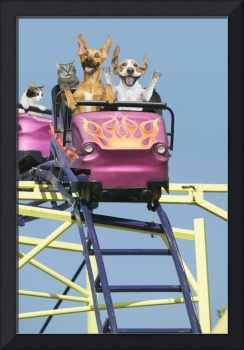 Cats-Dogs-Riding-Rollercoaster