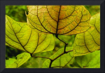 Golden Lantern Leaves