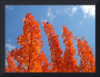 Autumn Leaves Blue Sky Fall art tree leaves prints