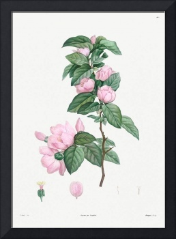 Pale Pink Flower Vintage Botanical