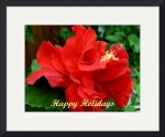 Red Hisbiscus Christmas Card 2008 by Jacque Alameddine