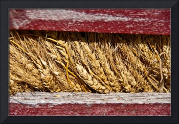 Wheat Between Boards