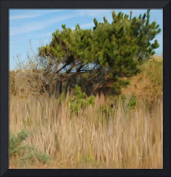 Pebble Beach Grasses