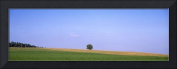 Tree on a field