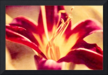 Red Lily Flower - Textured Effect