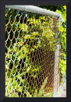 Rusty chain link fence plants