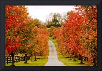 Fall Lane in Horse Country 9153
