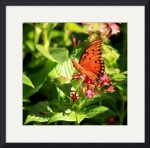 Butterfly in the Sun 6188 by Jacque Alameddine