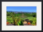 Wine Country by David Smith