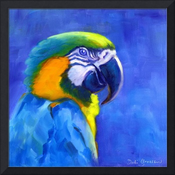 #2 Blue & Gold Macaw