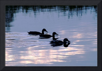 Mallard Ducks at Dusk  (18257-RDA)