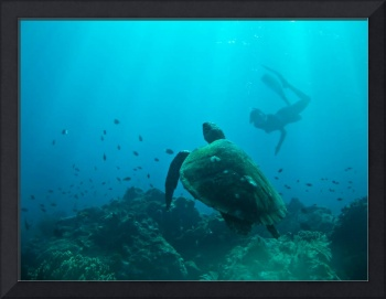 Underwater Diver and Turtle