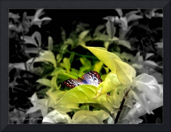 Butterfly In Hiding