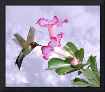 Hummingbird and Desert Rose