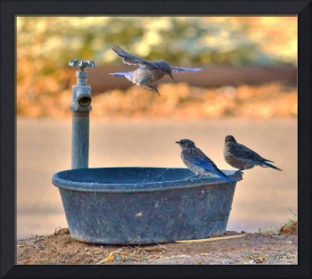Bird bath under attack
