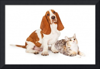 Basset Hound Dog and Calico Cat Together