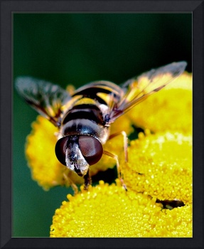 Hover Fly ll