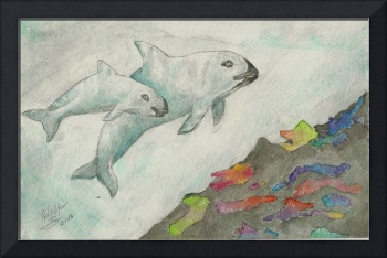 Two Vaquitas