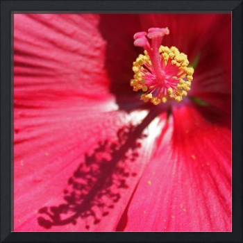 Red Flower, available in canvas, paper, or metal 1