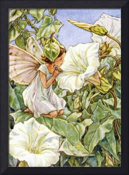 The Bindweed Fairy