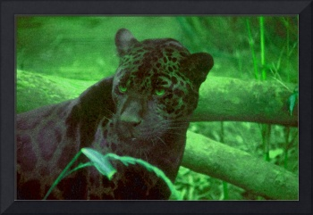 Black Panther in Green