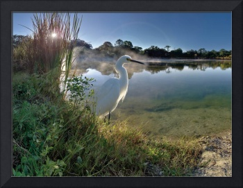 Egret Sunrise