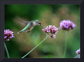Hummingbird  Green with purple flowers