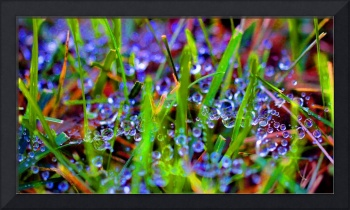Dew Dance Abstract