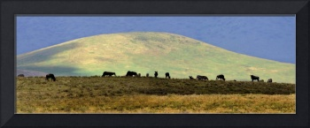 Digital Composite Panoramic of Herd of wildebeest