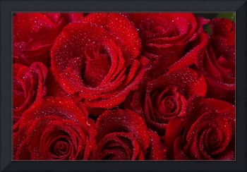 Red Roses and Water Drops