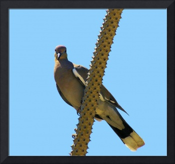 bird with ringed eye in blue on cactus rod