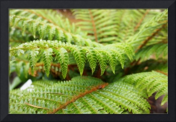 Green Forest Fern Art Prints Ferns nature