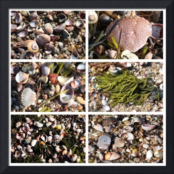 Seashells and Rocks Collage