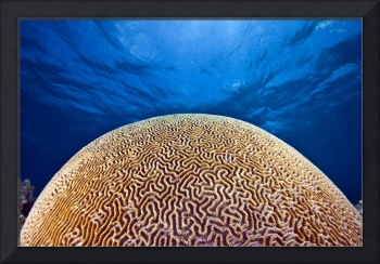 Brain coral or death star?
