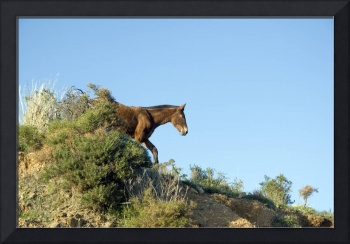Horse in the hills of Andalucia, Spain