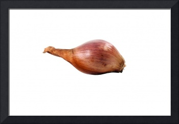 Isolated onion.