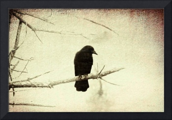 Crow On A Dead Branch