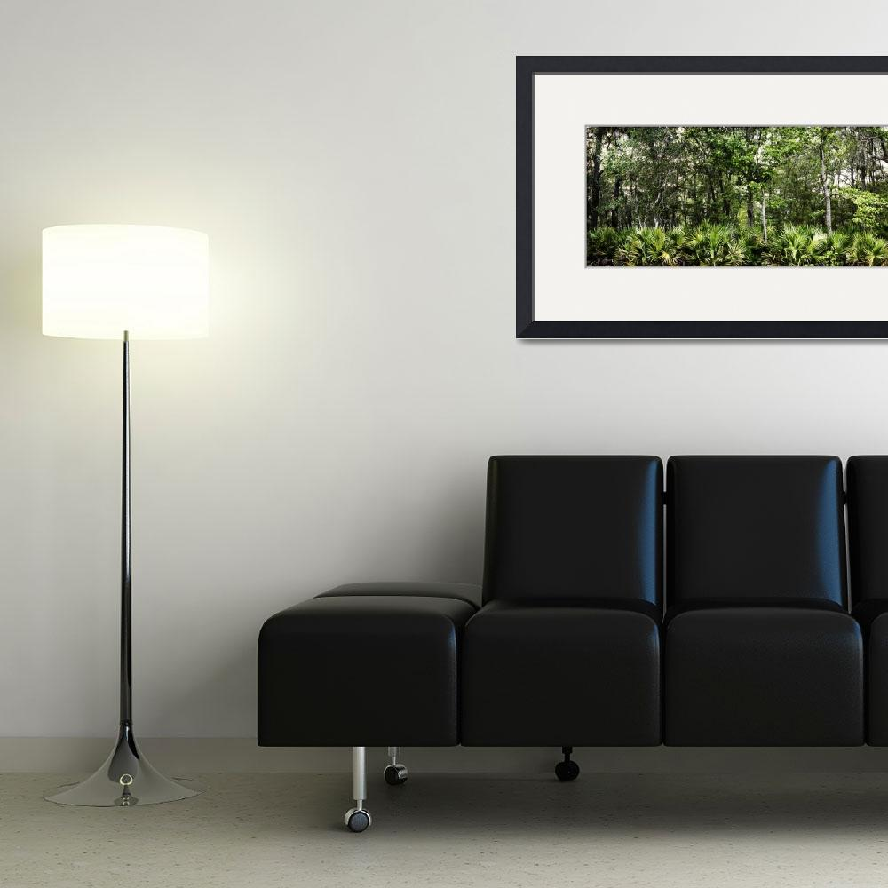 """""""Maritime Forest in Panorama&quot  (2011) by jimcrotty"""