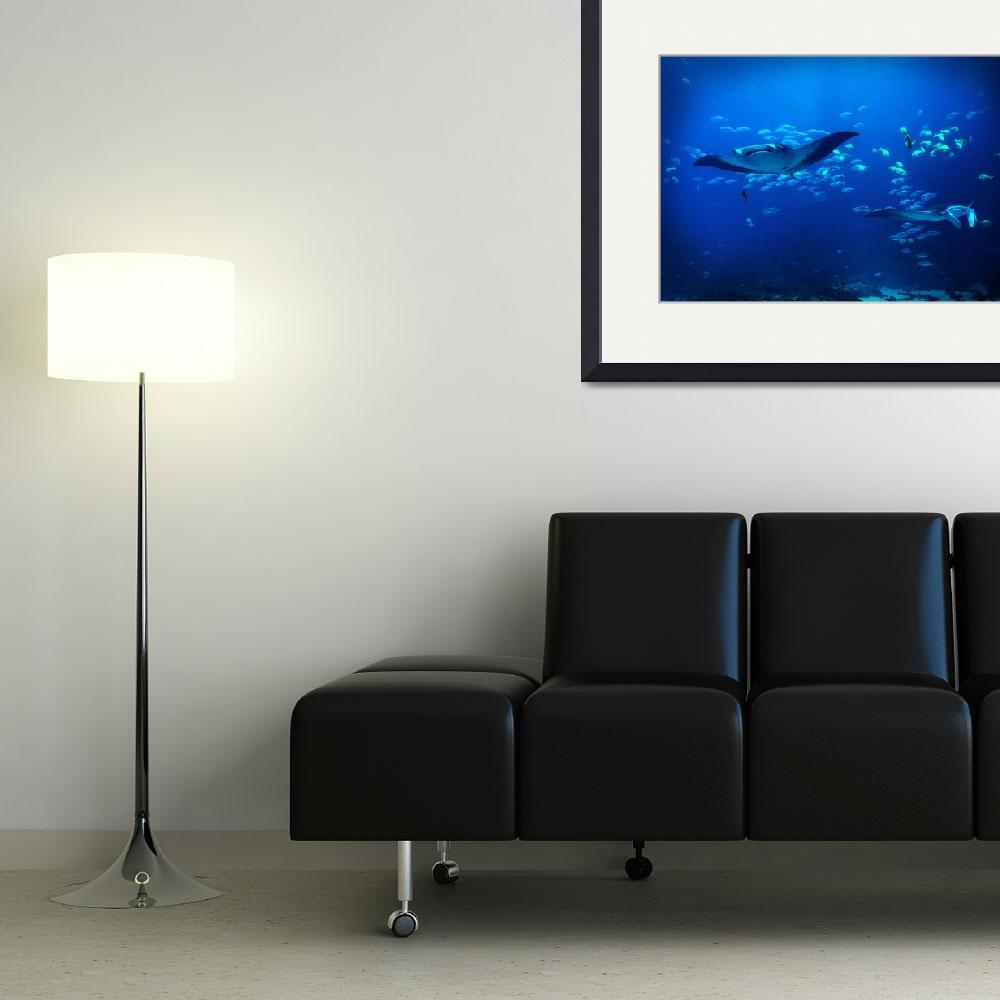 """""""Manta Rays Approaching&quot  (2014) by boehmphotography"""