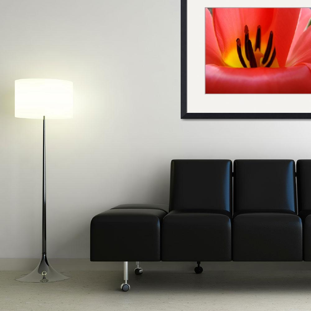 """Red Tulip Flower Macro art print Baslee Troutman""  (2010) by BasleeTroutman"