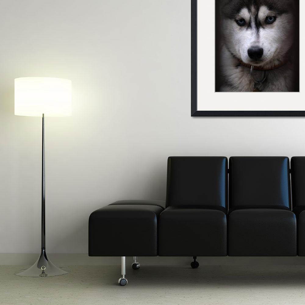 """""""Huskies Dog&quot  (2011) by MilanMKM"""