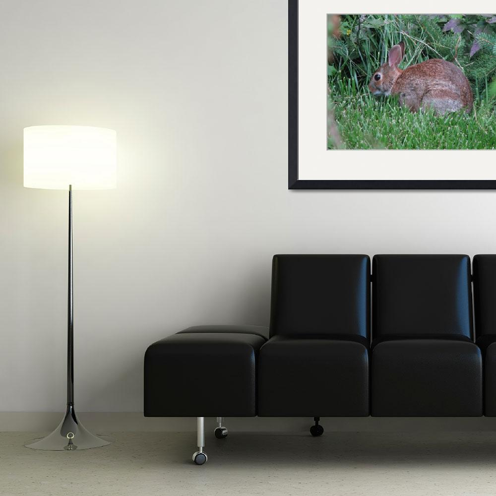 """""""Rabbit""""  (2014) by NorthPointImages"""