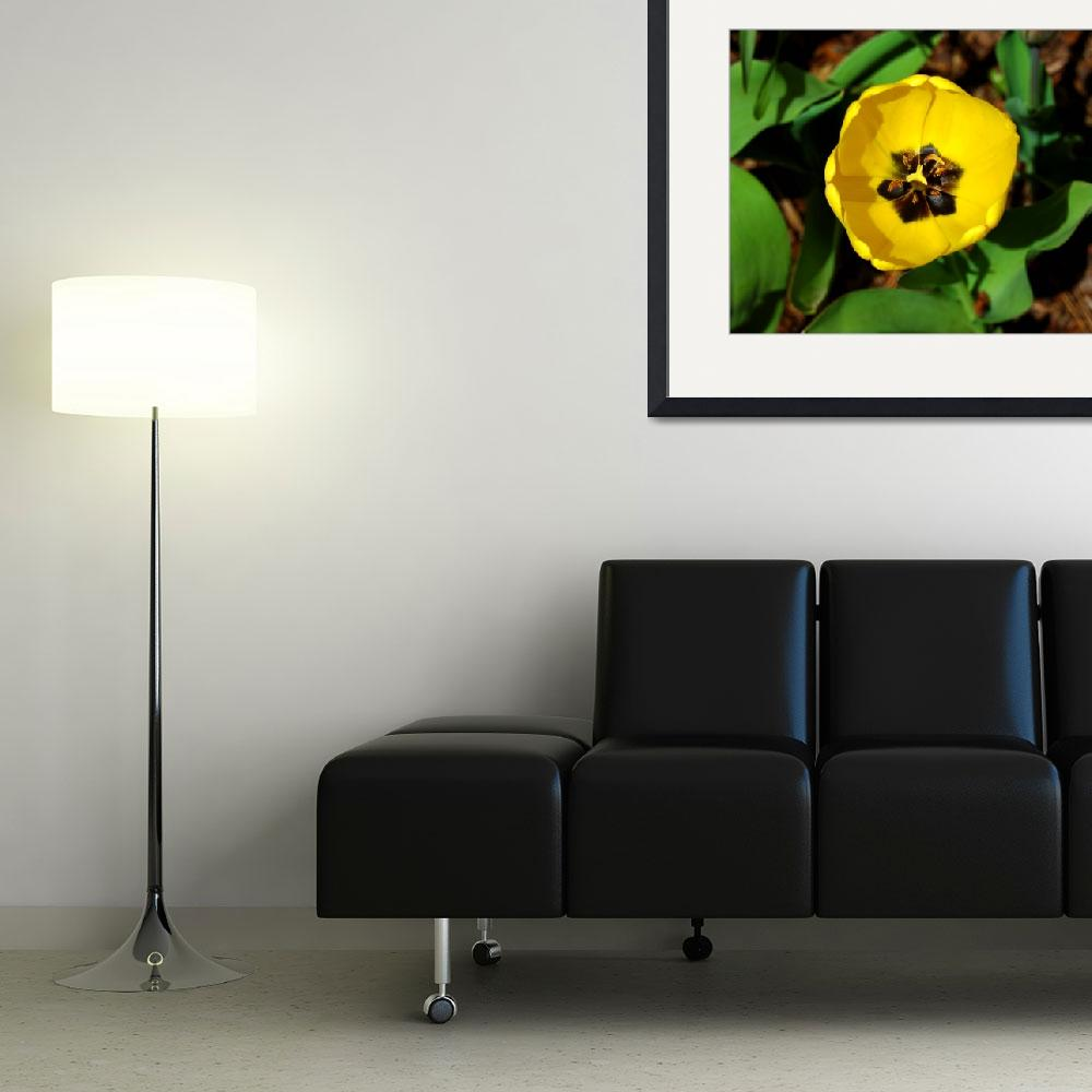 """Yellow Tulip #1&quot  (2008) by budo"