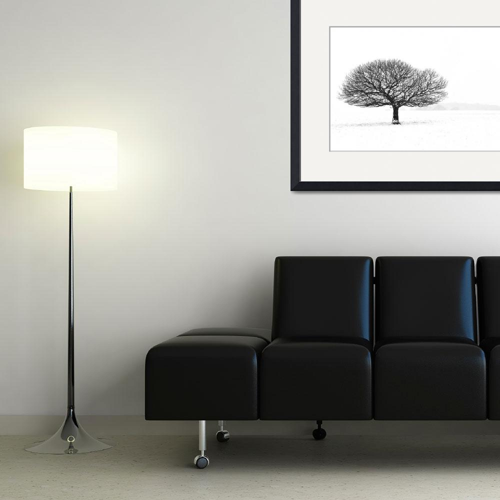"""""""Lonely tree&quot  (2010) by oleymoley"""